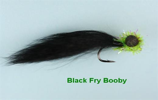 Black Fry Booby